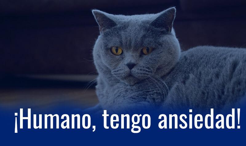 gatos con ansiedad