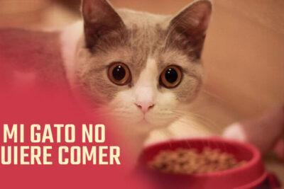 mi gato no tiene ganas de comer